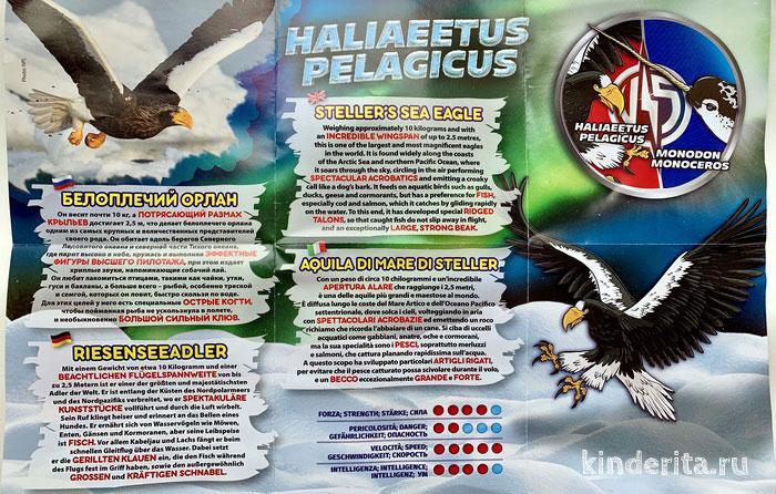 Белоплечий орлан — информация для доклада.